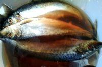 В надымском магазине женщина купила рыбу с червями