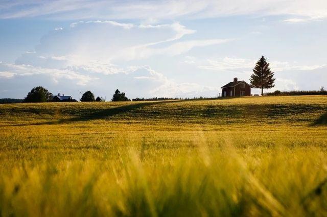 Власти Оренбуржье выделят фермерам 247 миллионов рублей на покупку удобрений