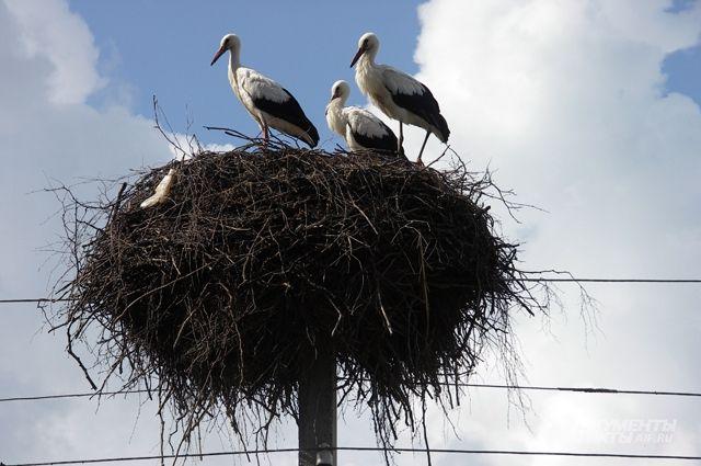 Летят перелетные птицы? Вернутся ли из-за тепла пернатые раньше, чем обычно