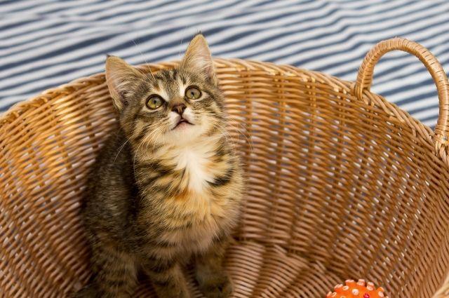 Присутствие кошки в доме создаёт необычайно комфортную обстановку.