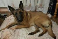 В Сумах собака спасла пенсионерку, которая упала в трехметровый погреб