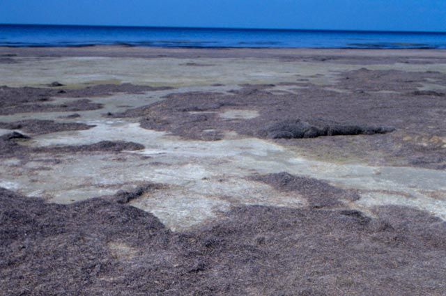 Высохшее дно Аральского моря.