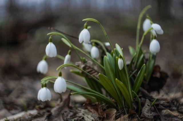 4 марта: праздники, именины, день Катыша, что категорически нельзя делать