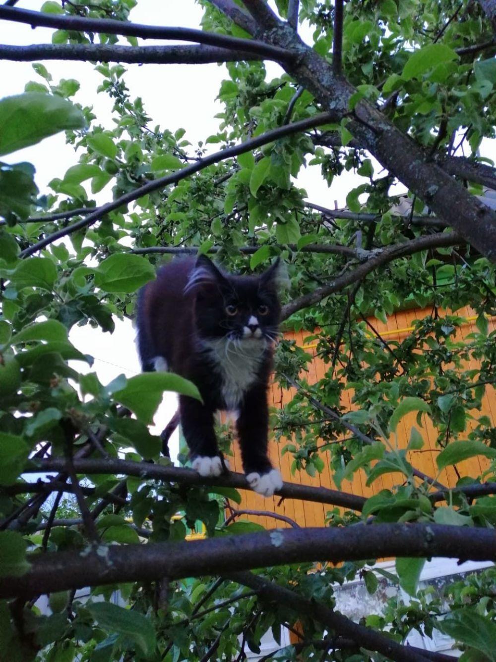 Участник №3: Ольга Радостева и ее кот Мурзик