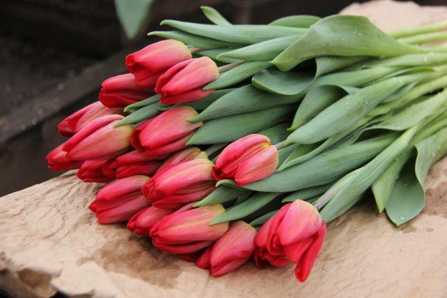 Тюльпаны - главные весенние цветы