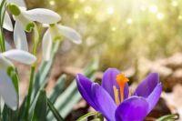 Погода на 8 марта: синоптики рассказали, что ждать украинцам