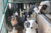 Часть собак останутся в питомнике – ждать новых хозяев,  других после стерилизации и вакцинации выпустят на улицу.