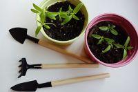 Миниатюрные инструменты для ухода  за рассадой и пикировки.