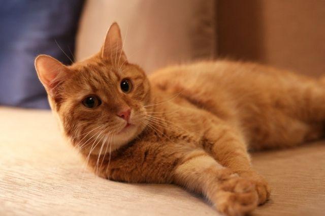 В Новосибирске завершилось следствие по резонансному делу об убийстве рыжего кота Мартина.