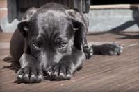 Чтобы забрать собаку из приюта, нужно иметь при себе поводок и паспорт. Кроме того, выбрать животное можно по фотографии .