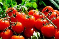 В Японии есть помидор-гигант, посаженный ещё в 1953 году.