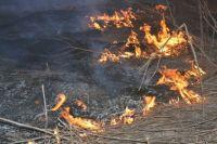 Во Львовской области погибла пенсионерка, сжигавшая сухую траву