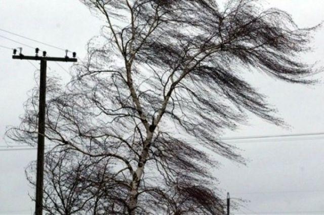 В Оренбуржье прогнозируют сильный ветер