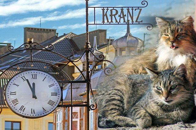 День рождения зеленоградского кота перенесут