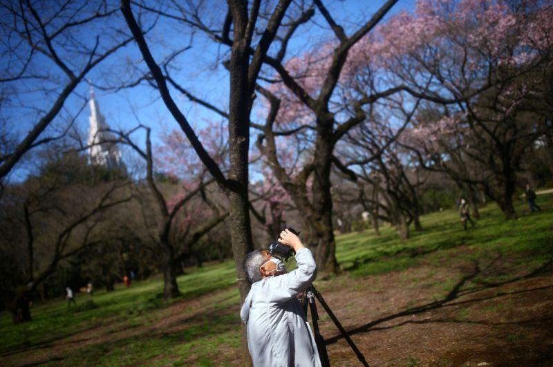 Посетители в национальном парке Синдзюку-Гёэн в Токио.