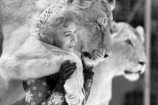 Укротительница хищников Ирина Бугримова выступает со львами. 1966 год.