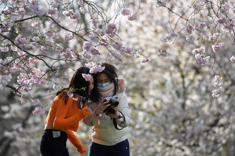 Девушки фотографируются в национальном парке Синдзюку-Гёэн в Токио.