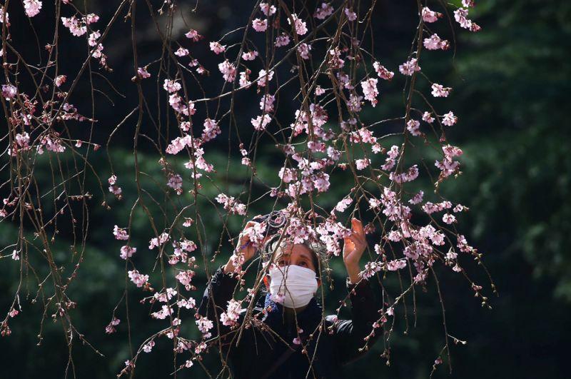 Редкие посетители в национальном парке Синдзюку-Гёэн в Токио.
