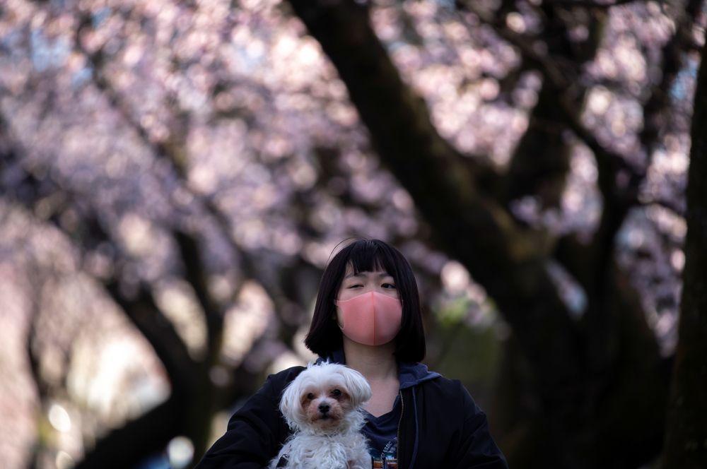 Девушка с собакой на фоне цветущих деревьев в префектуре Сайтама.