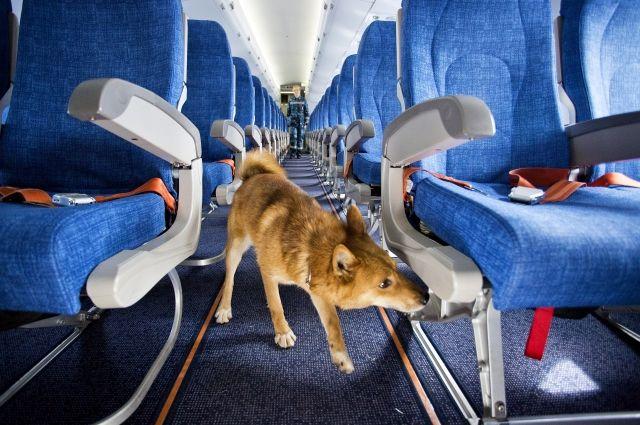 Безопасность в авиации - превыше всего, и в небе, и на земле.