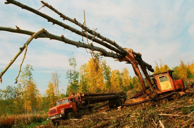 В крае сосредоточено 14% лесного фонда России - это более 3% мировых запасов древесины.