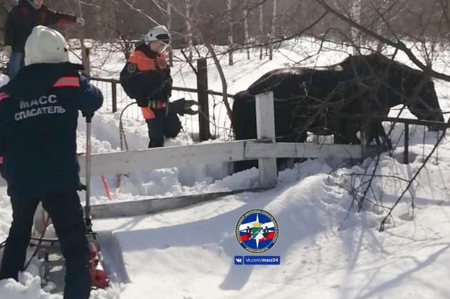 Из-за глубокого снега лошадь застряла в прутьях забора в Новосибирске.