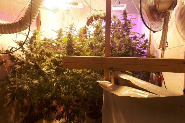 Мужчина оборудовал в своей квартире лабораторию, в которой выращивал наркосодержащие растения.
