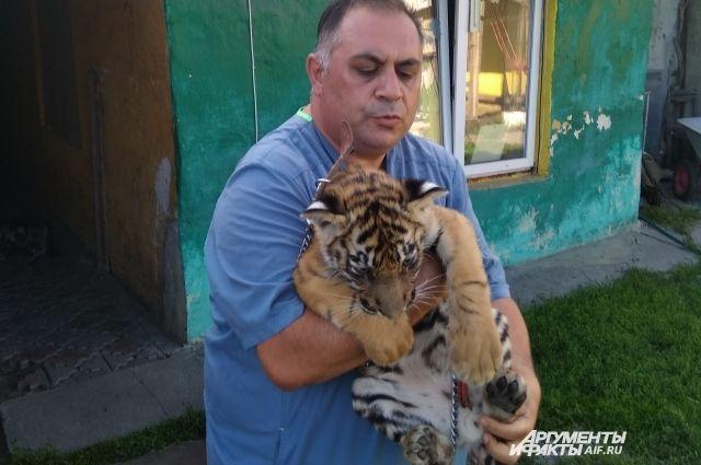 Покалечивший тигренка оренбуржец не смог приехать в суд из-за границы.