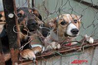 По словам местных жителей, бездомных собак в Солнечном немало.