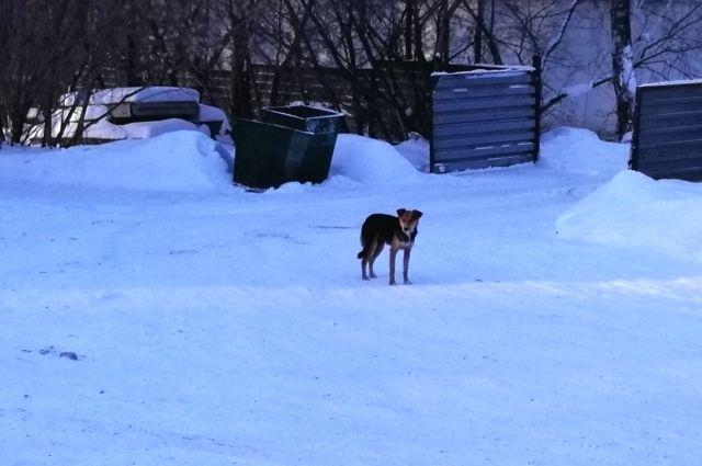 Чаще всего собаки прибиваются к местам, где их кормят.