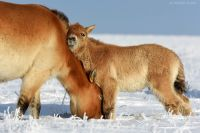Фото из оренбургского заповедника высоко оценил National Geographic.