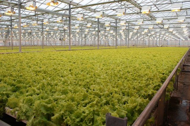 Весной тюменцев обеспечат достаточным количеством свежей зелени
