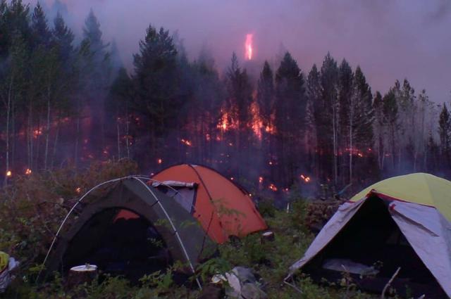 Greenpeace: малоснежная зима грозит европейской части РФ лесными пожарами