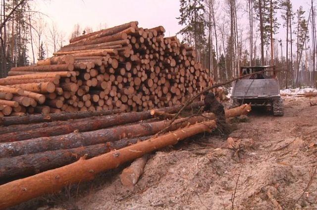 317 деревьев уничтожил житель близлежащего села.