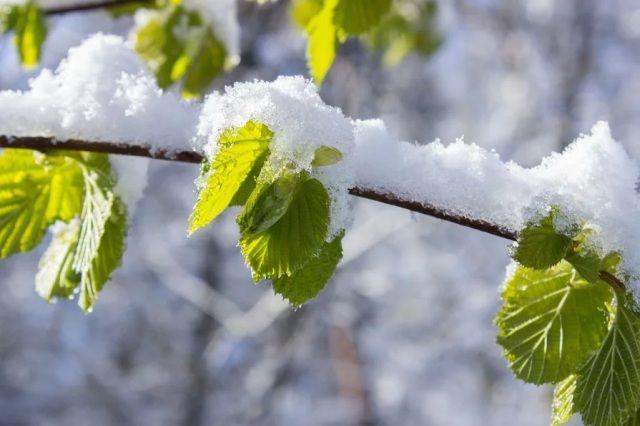 В апреле может и снег пойти.
