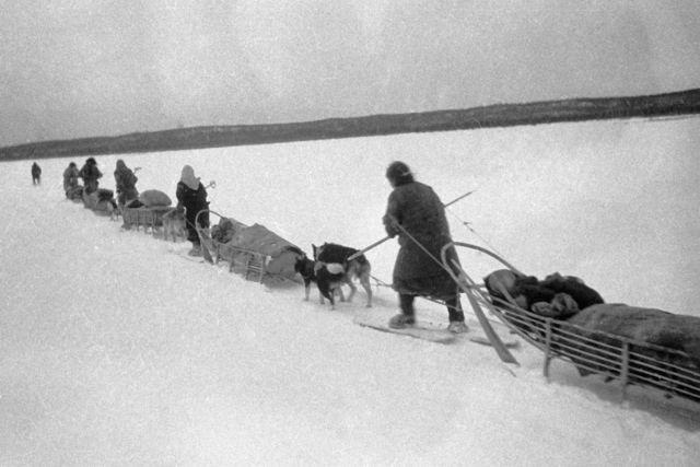 Пушниной, добытой охотниками-северянами, расплачивались с союзниками за поставки по ленд-лизу.