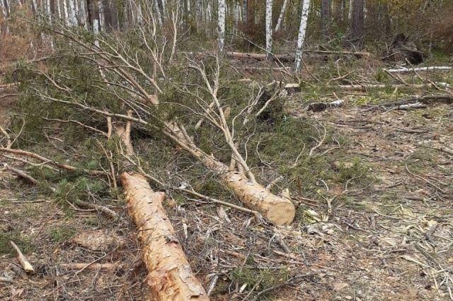 Незаконная рубка леса все чаще встречается именно в особо охраняемых природных территориях