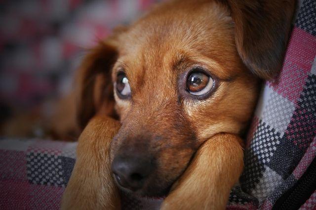 Местные зоозащитники утверждают, что закон о гуманном обращении с животными не работает в Улан-Удэ.