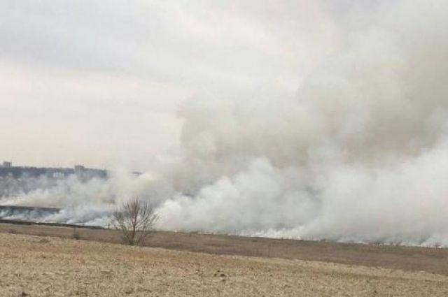 Во Львове предложили увеличить штраф за сжигание сухой травы в 200 раз