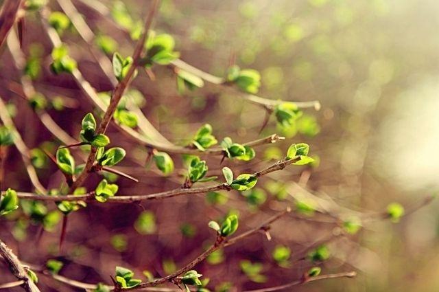 29 марта: праздник, переход на летнее время, обычаи и предписания дня