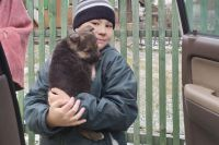 На счету 9-летнего Матвея Мамедова не один десяток собак и кошек, которым он помог.