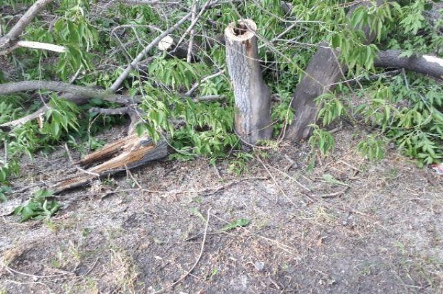 В Тюмени неизвестные вырубили деревья на 4,5 млн рублей