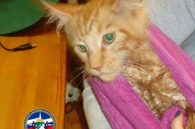 Лапа кота застряла в металлической сетке мойки, самостоятельно освободить животное хозяева не смогли.