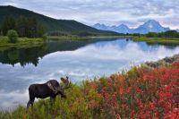 Животному миру причинили ущерб более 3 миллионов рублей из-за рубки 590 тысяч куб.м. лесов