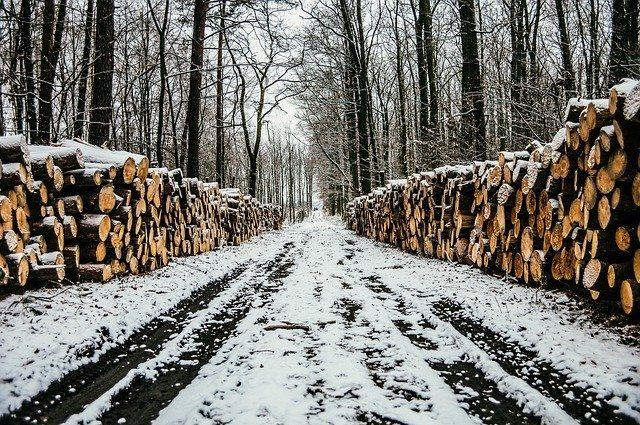 Руководители коммерческой организации покупали на территории области незаконно добытую древесину.