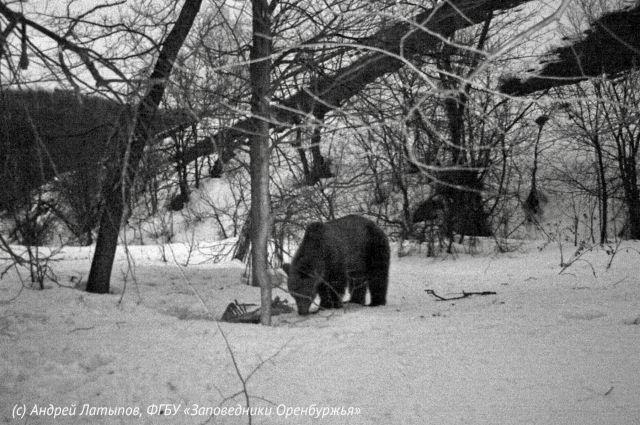 Госинспекторы установили фотоловушки, чтобы запечатлеть животных после зимы.