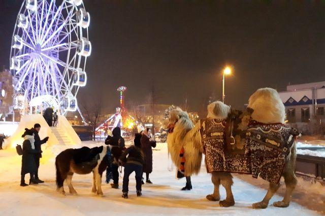 Верблюд Кеша уезжает в Ленинградскую область