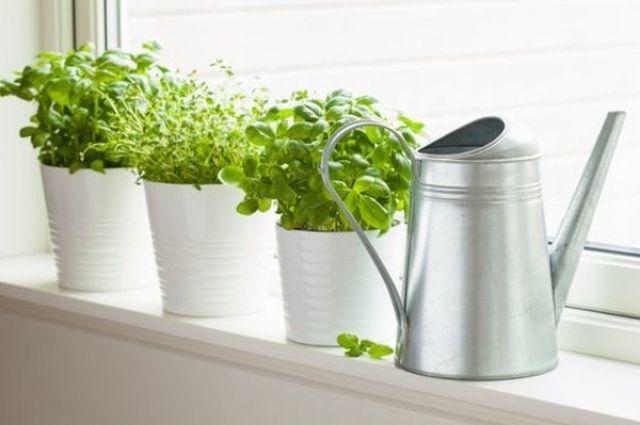 Огород на подоконнике: выращиваем овощи и зелень, не выходя из дома