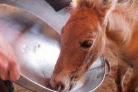 В Оренбуржье на волю выпущен спасенный жеребенок лошади Пржевальского.