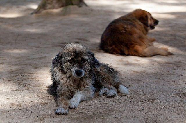 В Ливане из-за фейка о COVID-19 возросло число бездомных животных